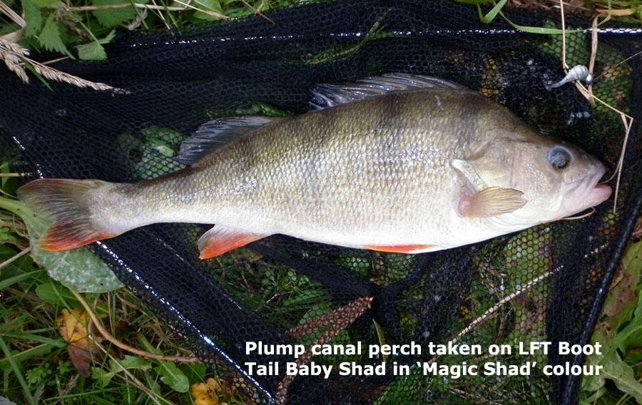 "LFT 2.25"" Boot Tail Baby Shad - Violet Shad (15pcs)"
