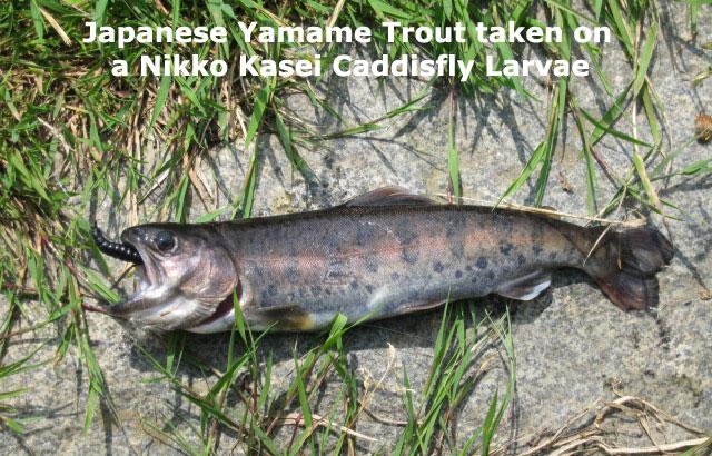 "Nikko-Kasei 1"" Caddisfly Larvae - Black (5pcs)"