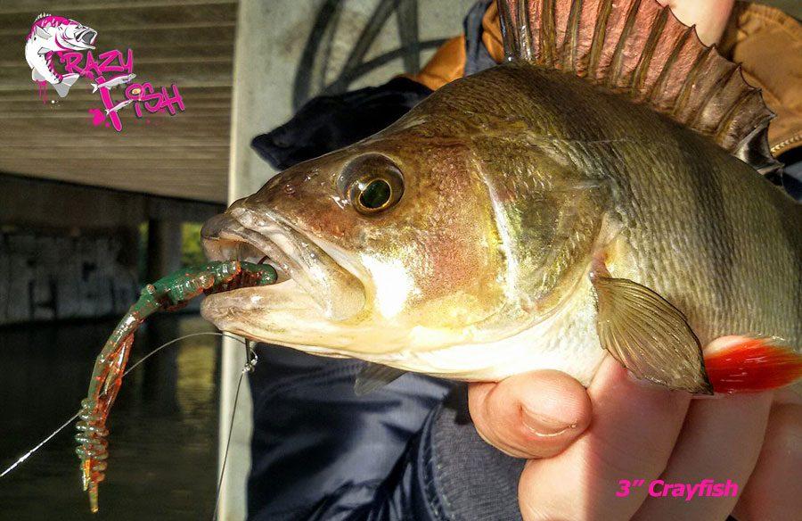 """Crazy Fish 3"""" Crayfish - 9 Caramel (7pcs)"""
