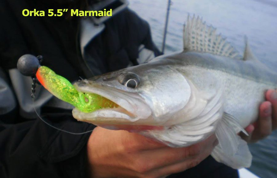 "Orka 5.5"" Marmaid - FY Chartreuse Flash (3pcs)"