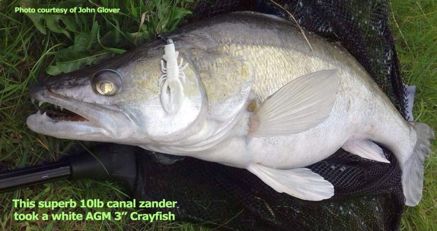 zander-crayfish-white